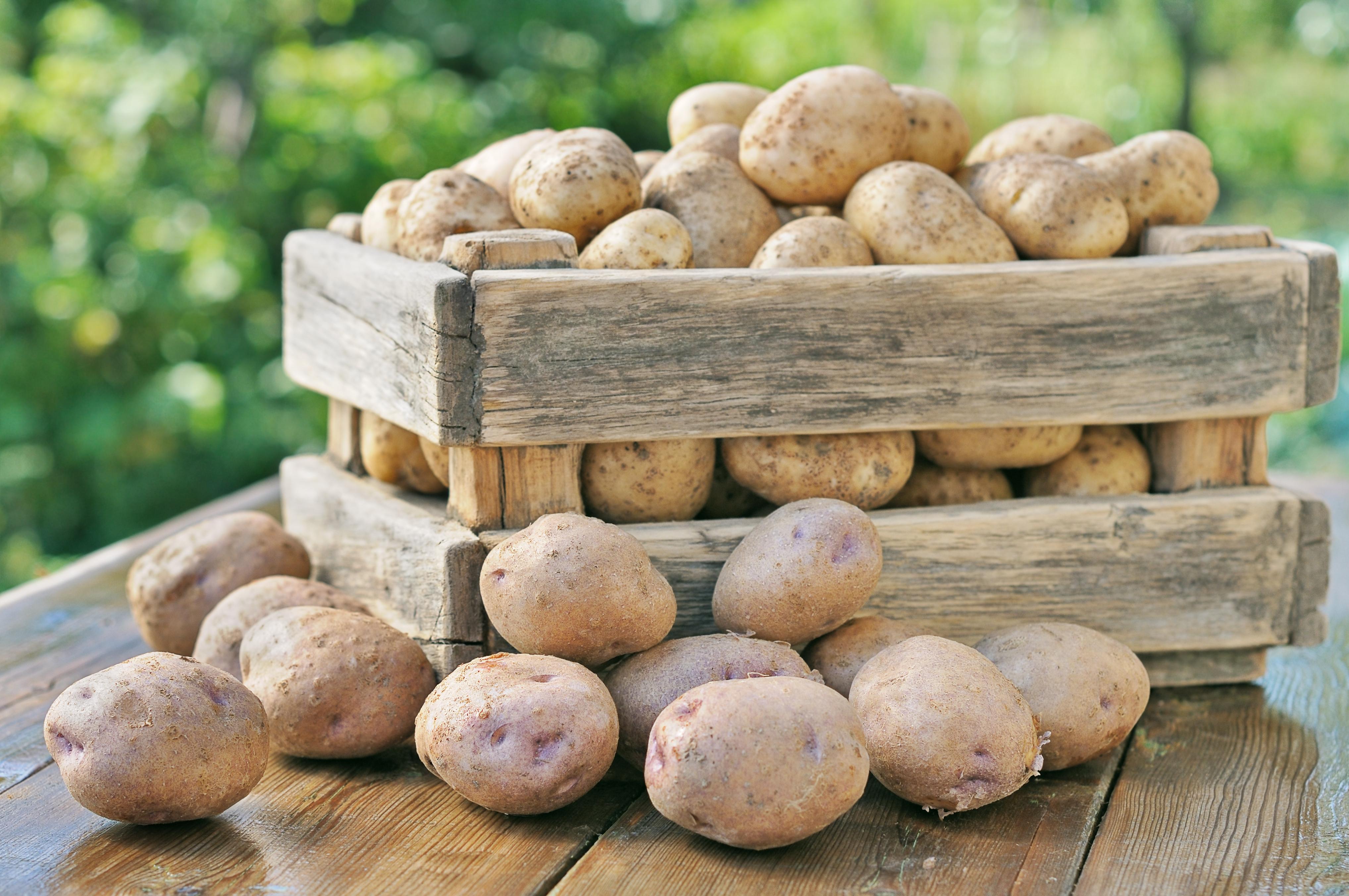 Etwas Neues genug Kartoffeln richtig lagern | seitenbacher.de #AI_85