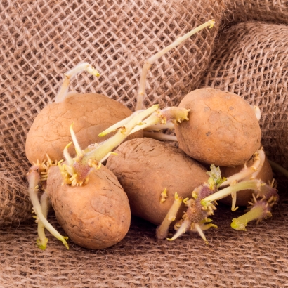 Bekannt Kartoffeln richtig lagern | seitenbacher.de SM24
