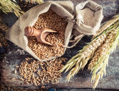 Der Ursprung Getreide