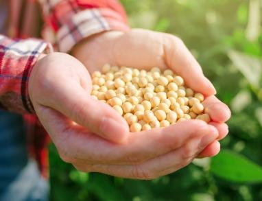Sojabohnen Bircher Müsli